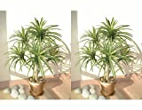 2 x 3ft Yucca Palms, Artificial Trees (Without Pots)