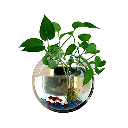 Wall Mounted Acrylic Fish Bowl by Fish Bubbles (29*29*13 cm, Mirror) (Fish Bubbles compare prices)