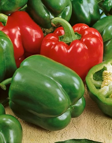 Bell Boy Hybrid Sweet Pepper Seeds - Capsicum Annuum - 0.2 Grams - Approx 30 Gardening Seeds - Vegetable Garden Seed