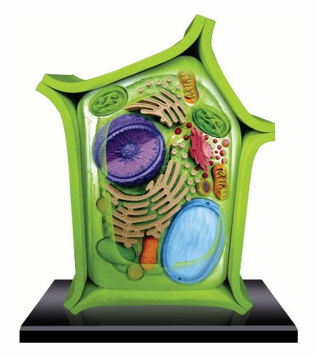 Beautifully detailed Plant Cell Anatomy Model - 24 detachable parts! (Age 8+) (Plant Cell Model compare prices)