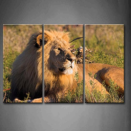 3 Panel Wall Art Resting Lion Lying Down The Grass Staring Painting Pictures Print On Canvas Animal The Picture For Home Modern Decoration Piece (Stretched By Wooden Frame,Ready To Hang)