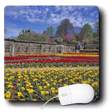 Mp_93283_1 Danita Delimont - Gardens - North Carolina, Biltmore, Wallen Garden Tulips - Us34 Rer0007 - Ric Ergenbright - Mouse Pads