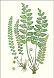 img - for Fern Notelet book / textbook / text book