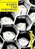 Image de Wespen und Hornissen: Die einheimischen sozialen Faltenwespen