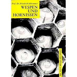 Wespen und Hornissen: Die einheimischen sozialen Faltenwespen