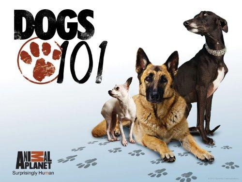 Animal Planet Dogs 101 | Animal Planet