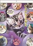 2017板東寛司 猫壁掛 いろいろこねこ12ヵ月こねこ図鑑カレンダー (風呂猫アートカレンダー)