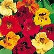 Outsidepride Nasturtium Seed Mix - 1 LB