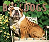 For the Love of Bulldogs 2004 Calendar