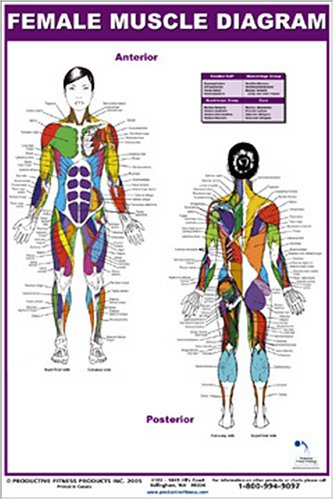 Female Muscle Diagram (Anatomy Chart Muscles compare prices)