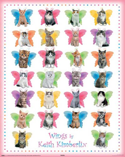 Merchandising 523372 Keith Kimberlin - Wings Cats Katzen Baby Kitten Mini-Poster - Druck - Grösse 40 x 50 cm