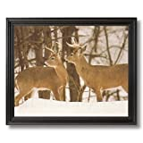 Two Large Whitetail Buck Deer In Snow And Trees Animal Wildlife Home Decor Wall Picture Black Framed Art Print