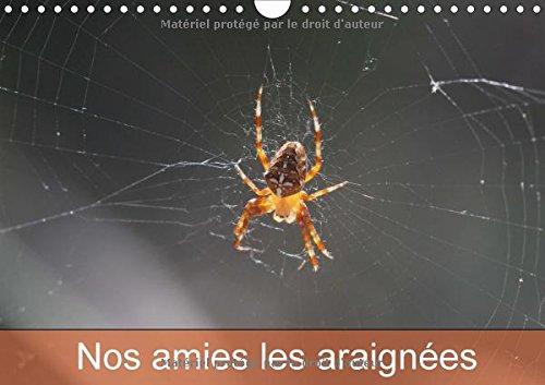 nos-amies-les-araignees-le-monde-des-araignees-et-des-insectes-calendrier-mural-a4-horizontal-2017