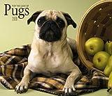 For the Love of Pugs 2009 Calendar
