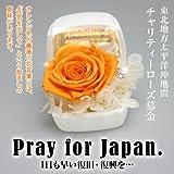 【東北地方太平洋沖地震】チャリティーローズ募金/オレンジ色のバラ(プリザーブドフラワー)で被災者の方々の力に…