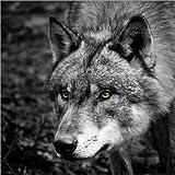 Leinwandbild 70 x 70 cm: Wolf von Stephanie Wittenburg – fertiges Wandbild, Bild auf Keilrahmen, Fertigbild auf echter Leinwand, Leinwanddruck