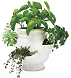 Wind and Weather Ready-to-Grow Herb Kit