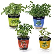 フレッシュハーブ:4種栽培セット(底面給水)[種から育てる栽培セット]