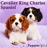 Avonside Publishing Cavalier King Charles Spaniel Puppies Mi