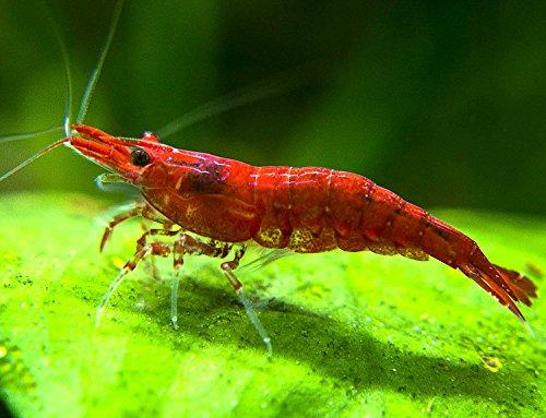 Art Pet Supplies Categories Fish & Aquatic Pets Food Aquarium ...