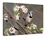 "iRocket Canvas Prints Wall Art - Blue Jay In A Bradford Pear Tree - Wood Board Background Stretched Canvas Wrap Ready To Hang For Home And Office Decoration - 20"" X 14"""