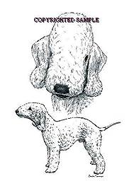 Bedlington Terrier - Double Image by Cindy Farmer