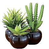 Artificial Miniature Succulents - Set of 3