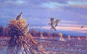 Owen Gromme - Prairie Chickens in Winter