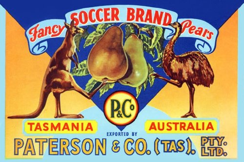 Fancy Soccer Pears - Tasmania - Australia, 32X48 Canvas Giclée, Gallery Wrap, Office Size front-765890