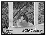2016 Shadow Cats TNR Black & White Wall Calendar 501(c)3 Charity