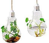【19blue】 電球型 ハンギングボトル 2個セット 花瓶 ガラス製 観葉植物 アンティーク 雑貨 (Aセット)