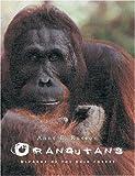 Orangutans: Wizards of the Rain Forest