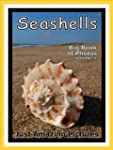 Just Seashell Photos! Big Book of Pho...