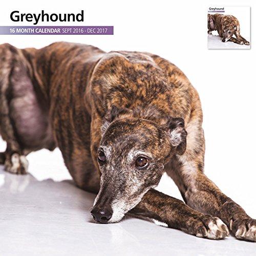greyhound-16-month-2017-wall-calendar