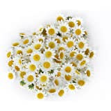 Approx 100pcs Artificial Gerbera Daisy Silk Flowers Heads for DIY Wedding Party (White)