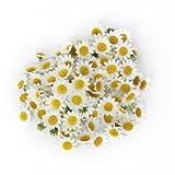 100x Künstliche Gerbera Blumen Köpfe für DIY Hochzeit