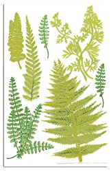Martha Stewart Crafts Fern Stickers By The Package