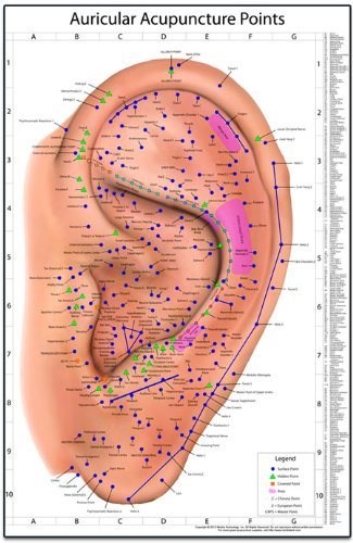 Auricular Acupuncture Points Chart (Auricular Chart compare prices)