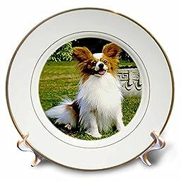 Dogs Papillon - Papillon - 8 inch Porcelain Plate (cp_496_1)