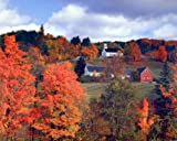 Autumn Red Trees Scenery Landscape Wall Decor Art Print Poster (16x20)