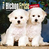 Bichon Frise Puppies 2014 Mini Calendar