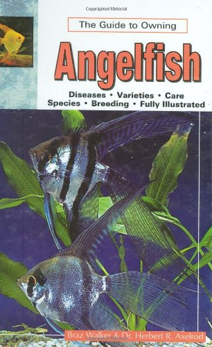 The Guide to Owning Angelfish