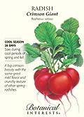 Radish Crimson Giant Seed