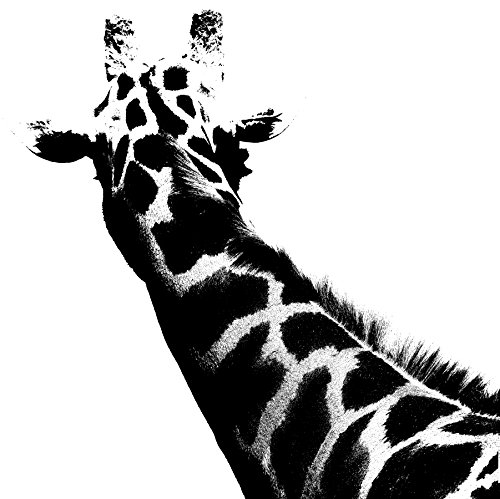 All things Giraffe