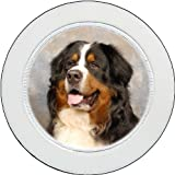 Tax Disc Holder ft The Bernese Mountain Dog