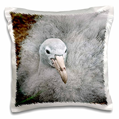 Danita Delimont - Birds - South Georgia Island, Southern Giant Petrel bird-AN02 CSL0032 - Charles Sleicher - 16x16 inch Pillow Case (pc_70542_1)