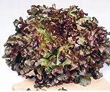 Just Seed - Vegetable - Lettuce - Red Salad Bowl - 50000 Seeds - Bulk Pack