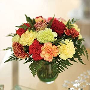 18 Luxury Carnations for the Price of 15