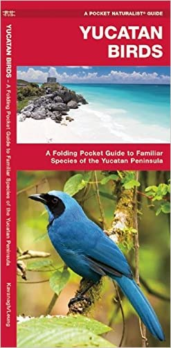 Yucatan Birds (Pocket Naturalist Guide Series)