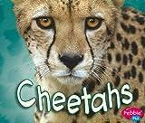 Cheetahs (African Animals)